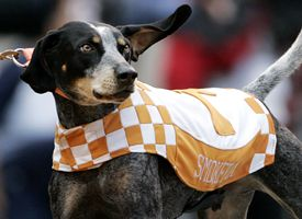 Smokey-UT's Blue Tick Coonhound